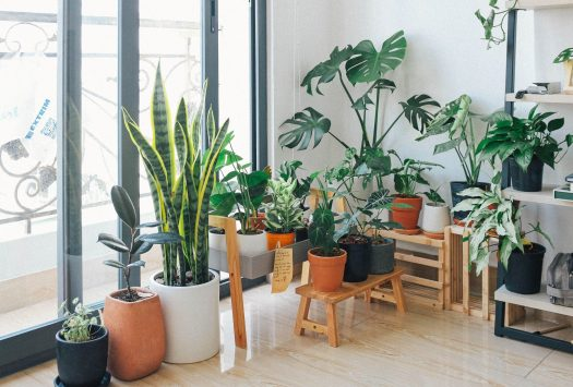 Huy Phan on Pexels potted green indoor plants 3076899 scaled 1 - Ways in Making Your New Property More Spacious